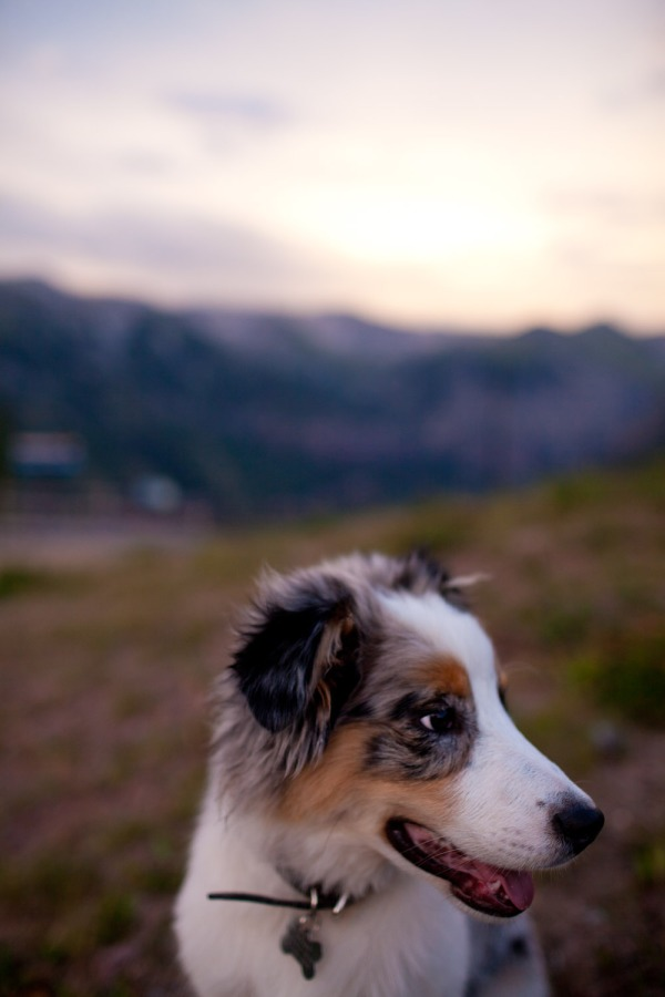 Pet Photography in Colorado
