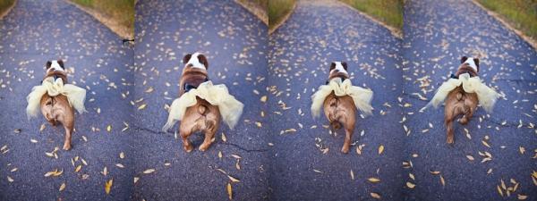 Dogs in a wedding in Aspen Colorado