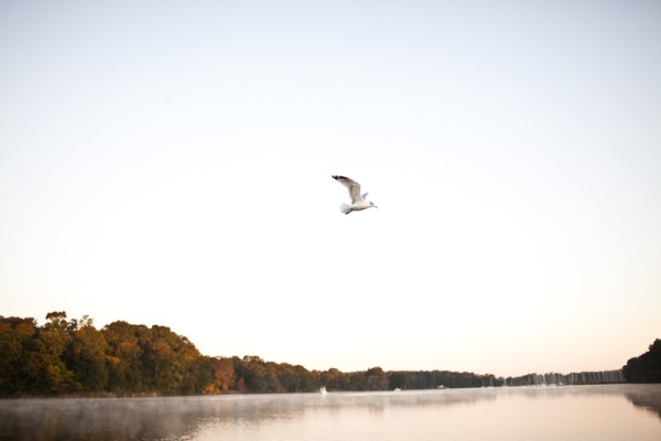 Chesapeake Bay wild life photography
