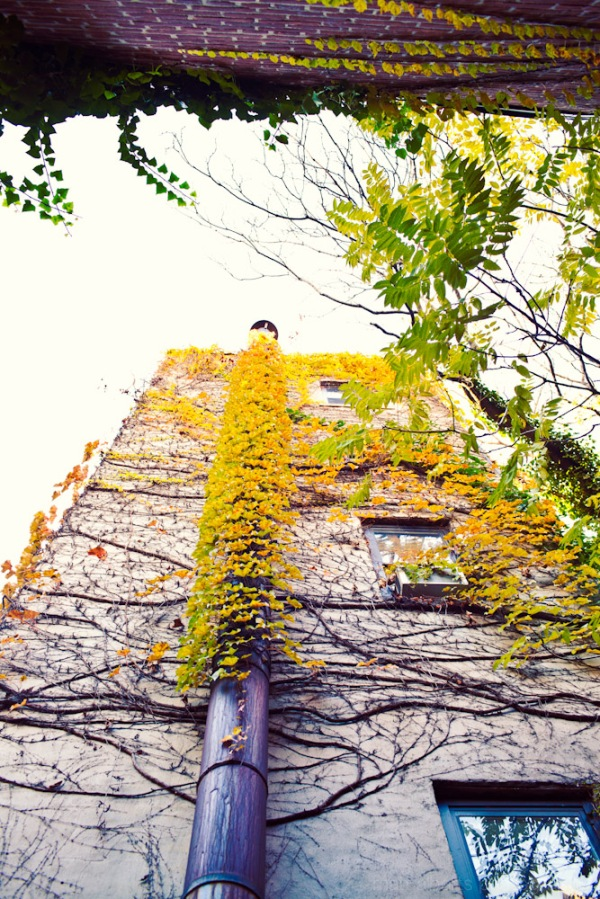 Amazing fall foliage photography on in the lower east side, New York City